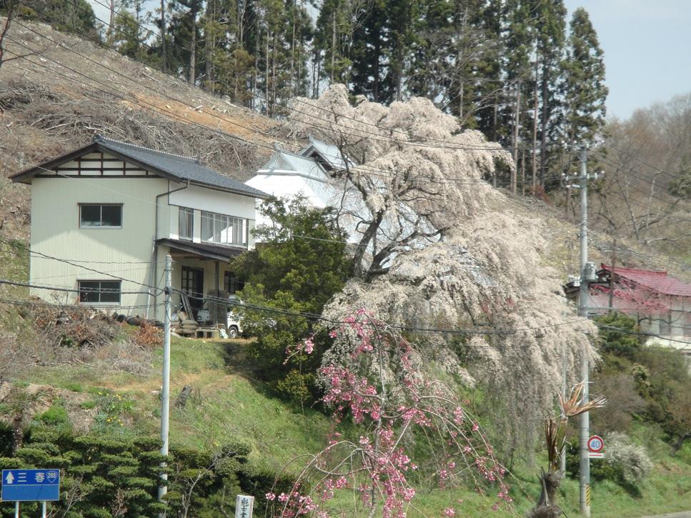 Kaiyamaminka