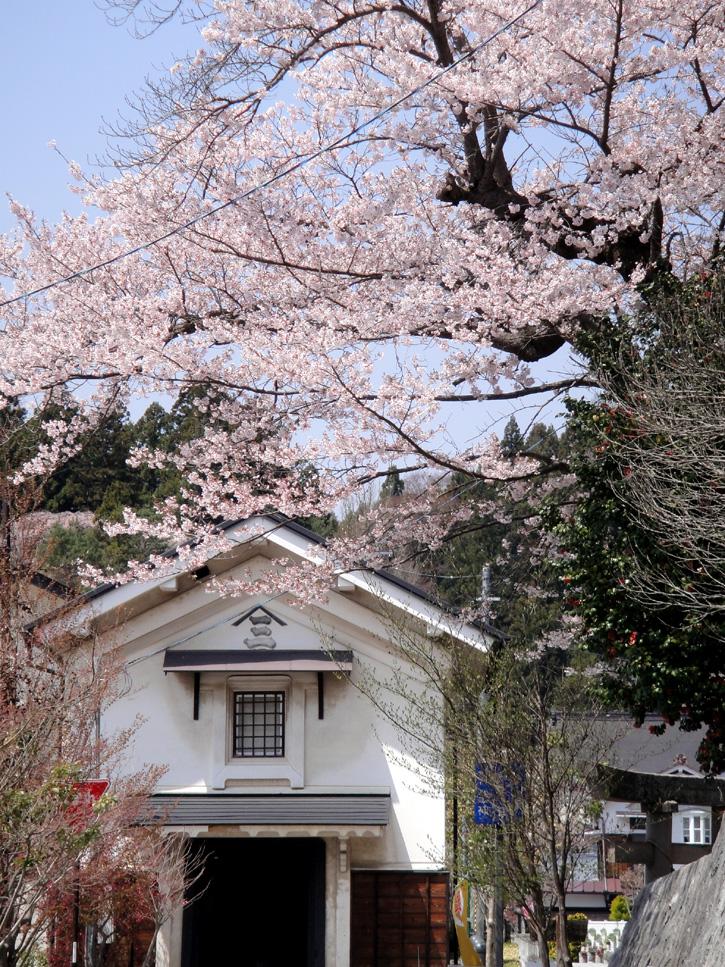 Oushisakura