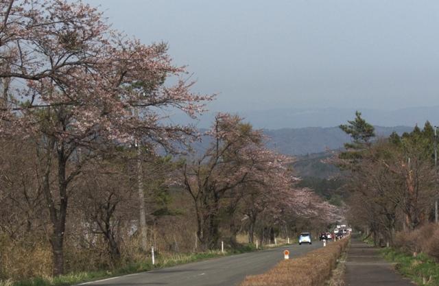 Sakuran1
